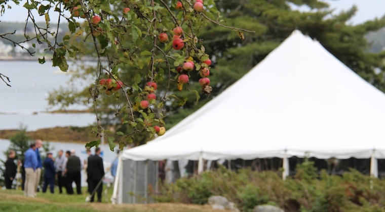 A September wedding means apples ripening on the trees at Harborfields Cottages, Boothbay Harbor, Maine!