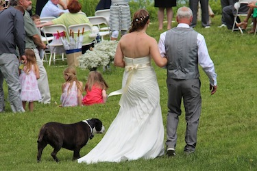 What a wonderful thing, to be a bride escorted down the wedding aisle by your dog as well as your father! at Harborfields Cottages, Boothbay Harbor, Maine!